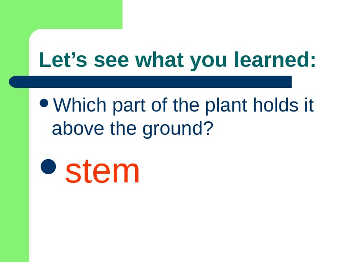 Let's see what you learned:  Which part of the plant holds it above the