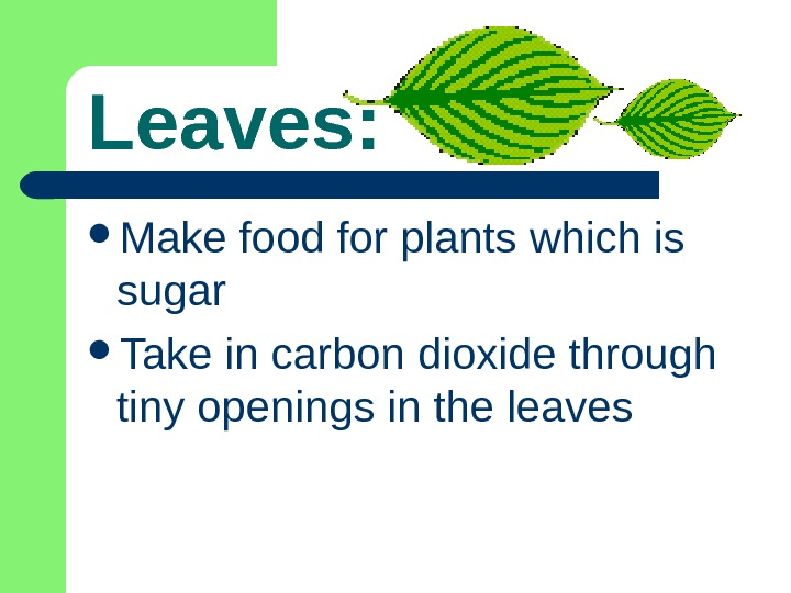 Leaves:  Make food for plants which is sugar Take in carbon dioxide through tiny