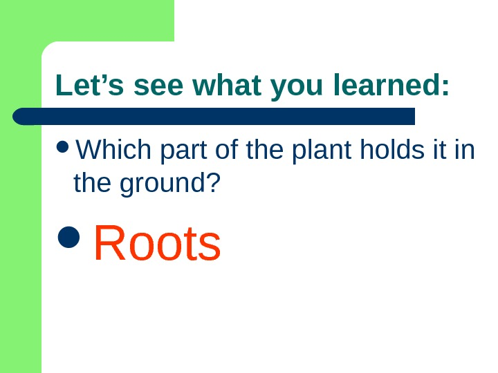 Let's see what you learned:  Which part of the plant holds it in the