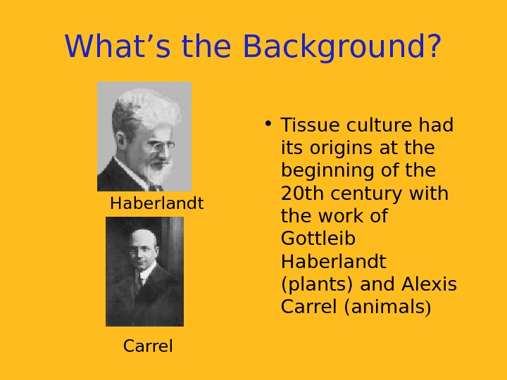 What's the Background?  • Tissue culture had its origins at the beginning of