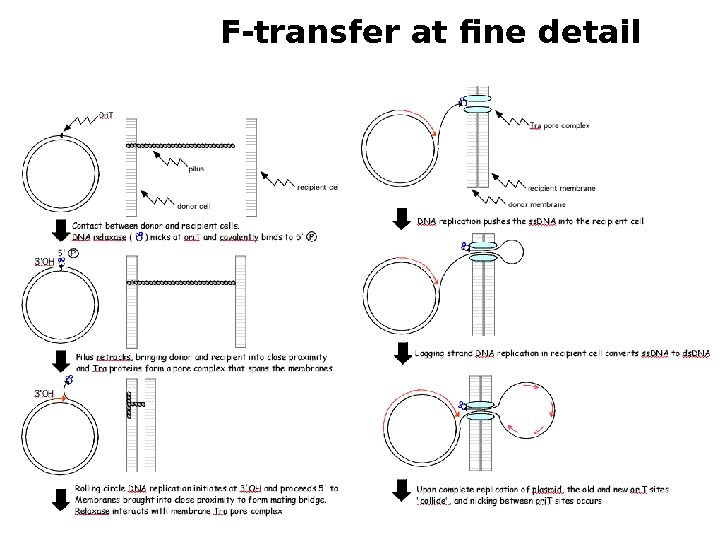 F-transfer at fine detail