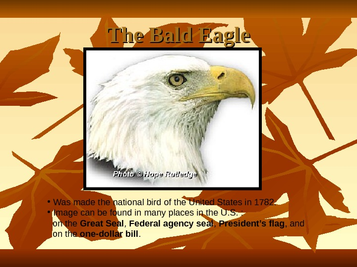 The Bald Eagle •  Was made the national bird of the United States in