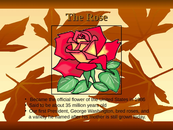 The Rose • Became the official flower of the United States in 1986 • Said