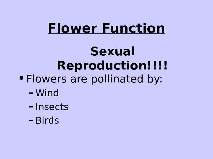 Flower Function • Flowers are pollinated by: – Wind – Insects – Birds Sexual