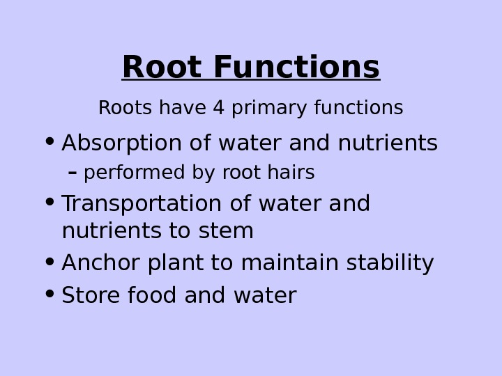 Root Functions • Absorption of water and nutrients – performed by root hairs •