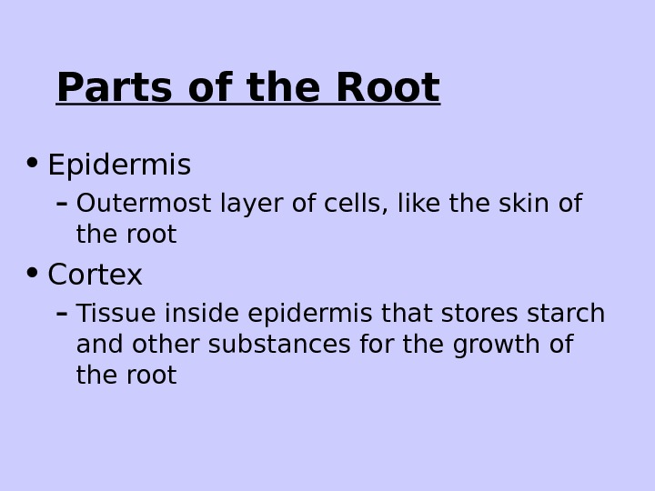 Parts of the Root • Epidermis – Outermost layer of cells, like the skin