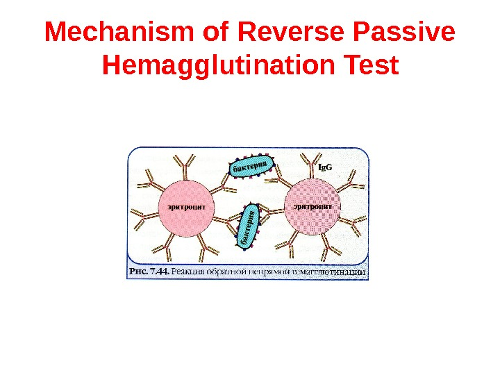 Mechanism of Reverse Passive Hemagglutination  Test