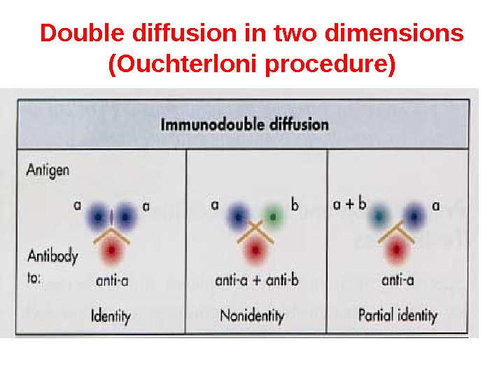 Double diffusion in two dimensions (Ouchterloni procedure)
