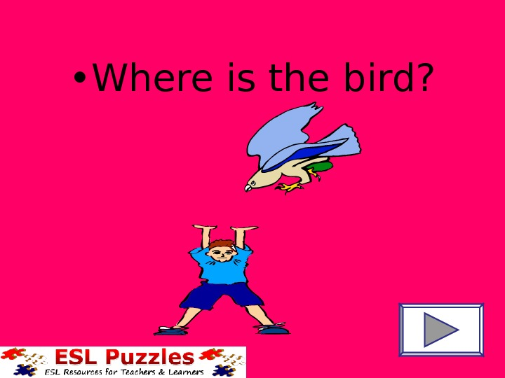 • Where is the bird?