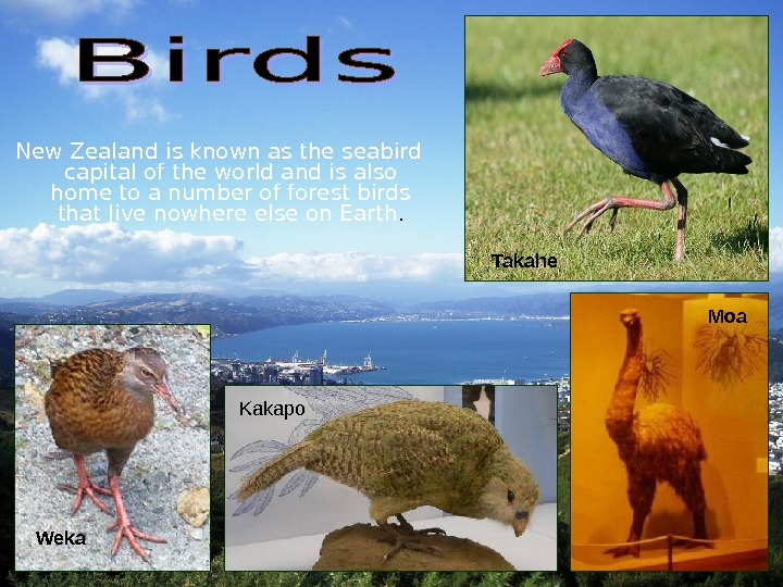 New Zealand is known as the seabird capital of the world and is also home to