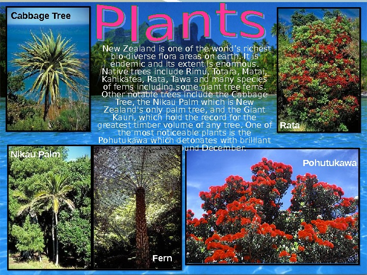 New Zealand is one of the world's richest bio-diverse flora areas on earth. It