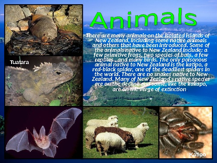 There are many animals on the isolated islands of New Zealand, including some native animals and