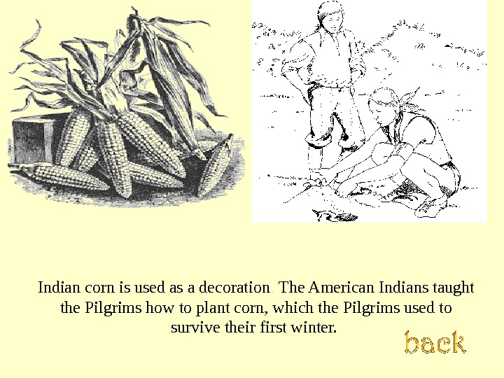 Indian corn is used as a decoration. .  The American Indians taught the Pilgrims how