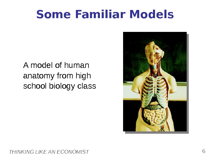 THINKING LIKE AN ECONOMIST 6 Some Familiar Models A model of human anatomy from high school