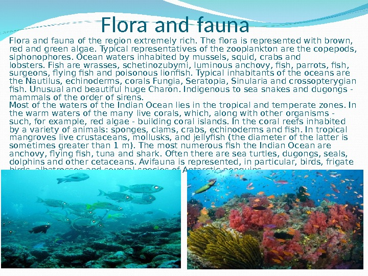 Flora and fauna of the region extremely rich. The flora is represented with brown,  red