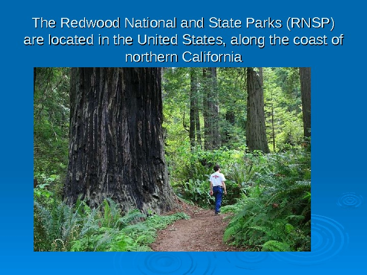 The Redwood National and State Parks (RNSP) are located in the United States, along