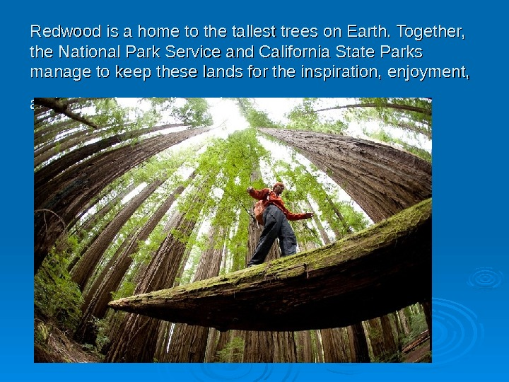 Redwood ii s s a a home to the tallest trees on Earth. Together,