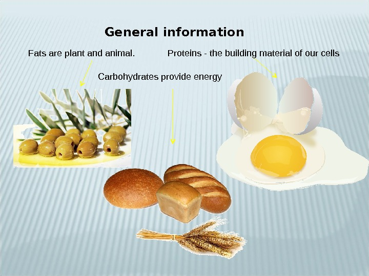 General information Fats are plant and animal. Proteins - the building material of our cells Carbohydrates