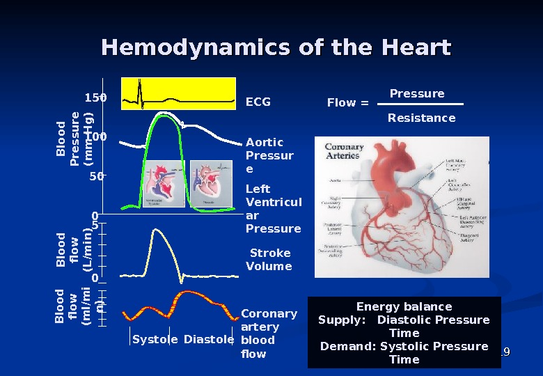 1919 Hemodynamics of the Heart Flow = Pressure Resistance Energy balance Supply:  Diastolic Pressure
