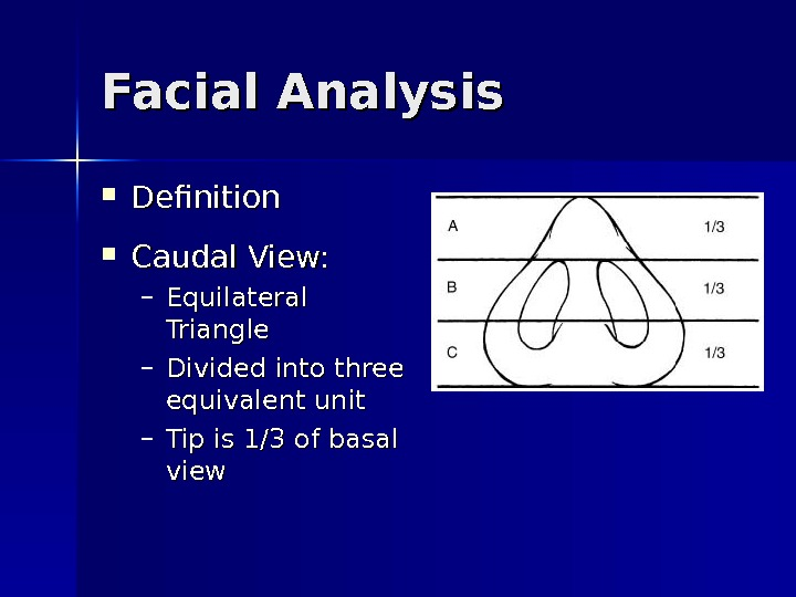 Facial Analysis Definition Caudal View: – Equilateral Triangle – Divided into three equivalent unit – Tip