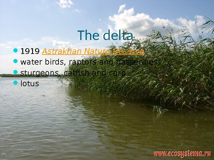 The delta  1919 Astrakhan Nature Reserve water birds, raptors and passerines sturgeons, catfish and carp