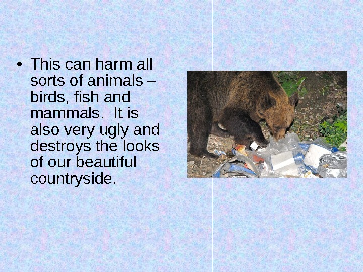 • This can harm all sorts of animals – birds, fish and mammals.  It