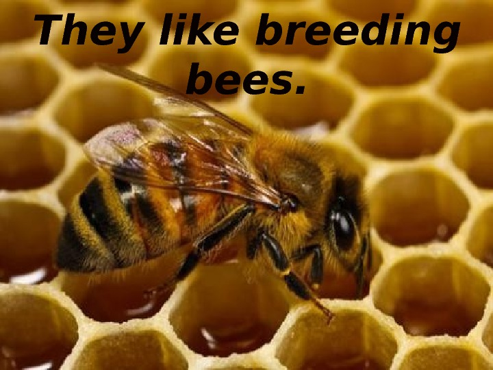 They like breeding bees.