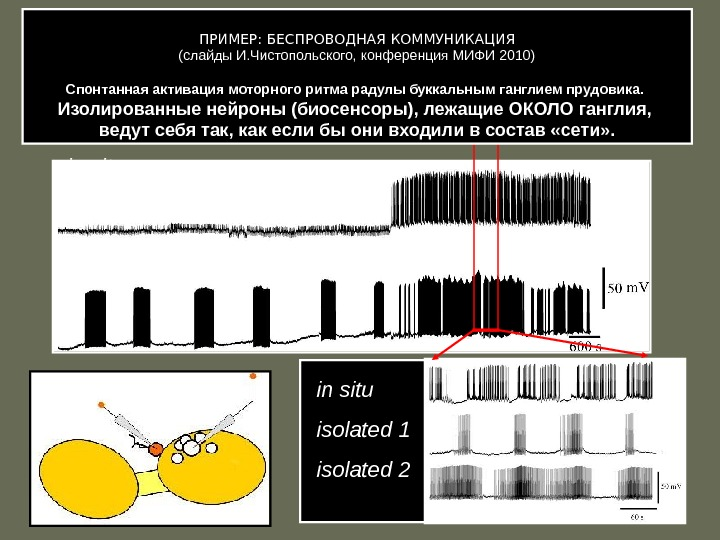 in situ isolated sniffer neuron in situ isolated 1 isolated 2ПРИМЕР: БЕСПРОВОДНАЯ КОММУНИКАЦИЯ (слайды И. Чистопольского,