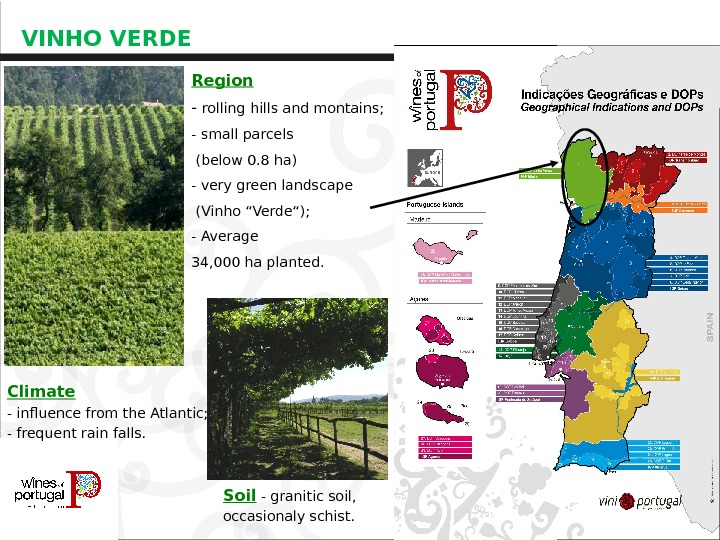 VINHO VERDE Region - rolling hills and montains; -  small parcels  (below 0. 8