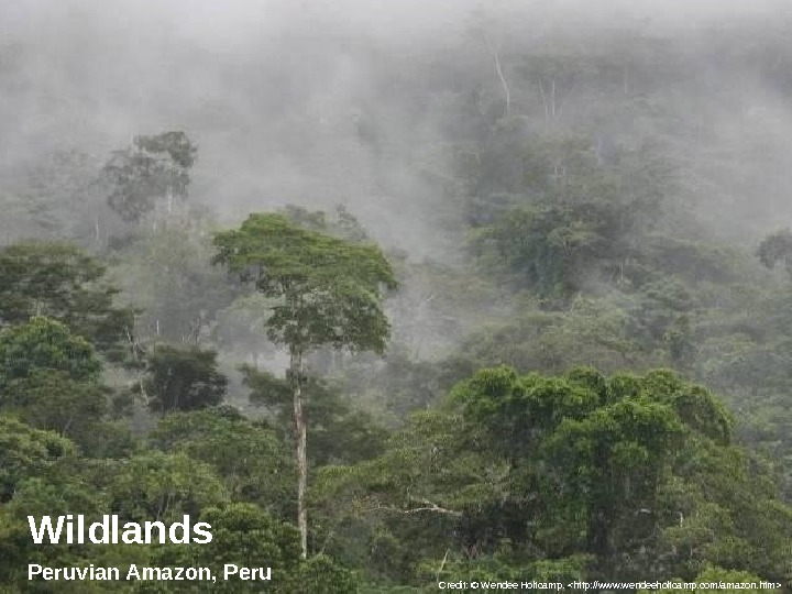 Wildlands Peruvian Amazon, Peru Credit: © Wendee Holtcamp. http: //www. wendeeholtcamp. com/amazon. htm
