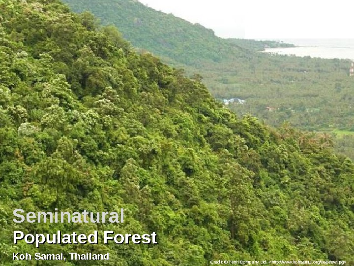 Populated Forest Koh Samai, Thailand Credit: © Yenit Company Ltd. http: //www. kohsamui. org/seaview. jpg Seminatural