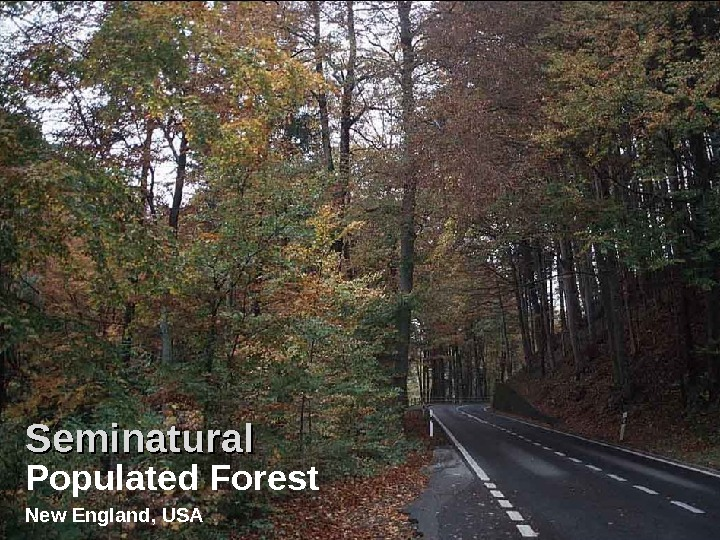 Populated Forest New England, USA Seminatural Populated Forest New England, USA