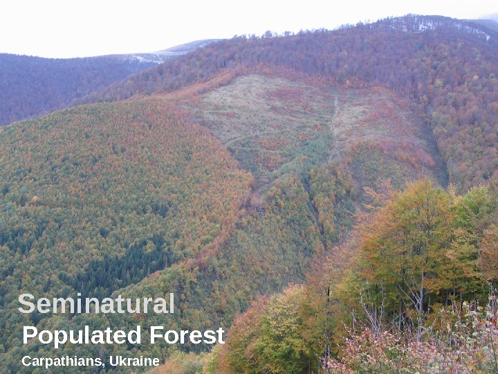 Seminatural Populated Forest Carpathians, Ukraine