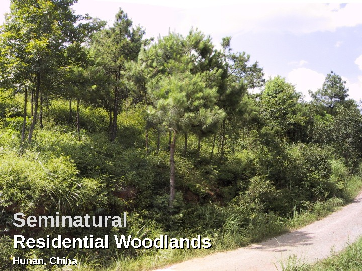 Residential Woodlands Hunan, China. Seminatural
