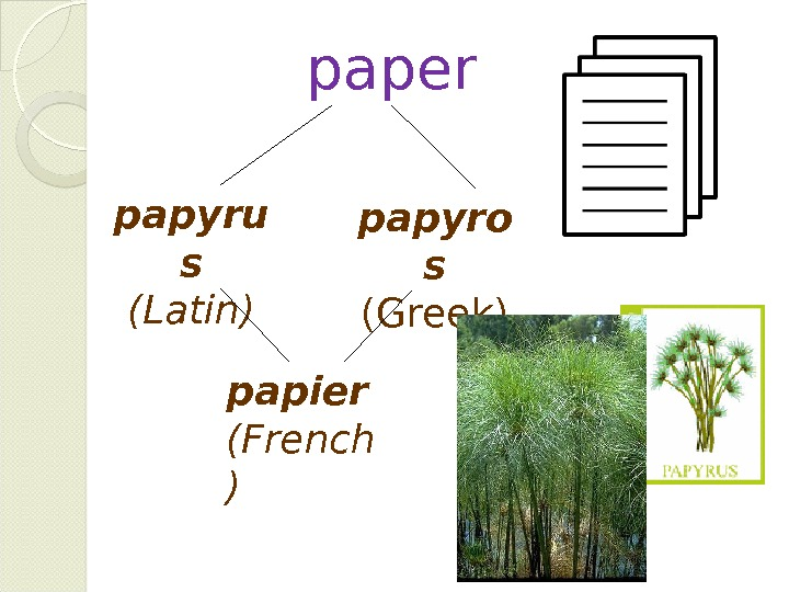 paper papier (French )papyru s (Latin) papyro s (Greek)