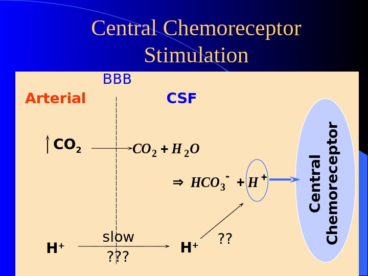 Central Chemoreceptor Stimulation Arterial CSF CO 2 COHO HCOH 22 3