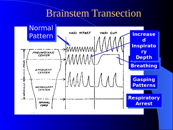 Brainstem Transection Normal Pattern Gasping Patterns. Apneustic Breathing Respiratory Arrest. Increase d Inspirato ry Depth