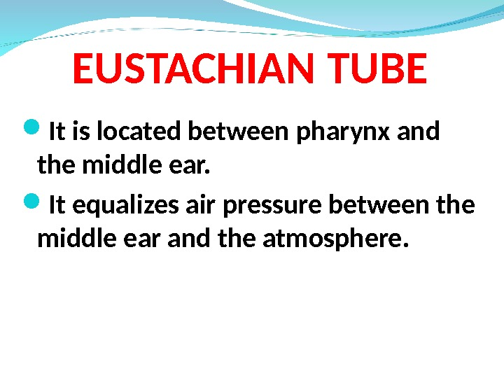 EUSTACHIAN TUBE It is located between pharynx and the middle ear.  It equalizes air pressure