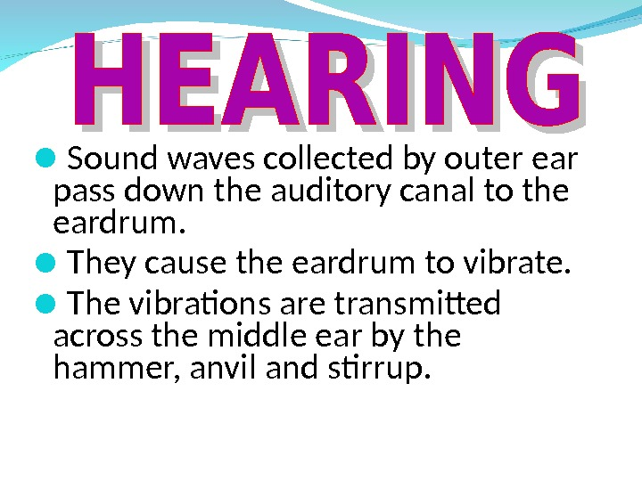 Sound waves collected by outer ear pass down the auditory canal to the eardrum.