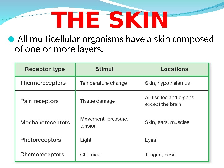 All multicellular organisms have a skin composed of one or more layers. THE SKIN