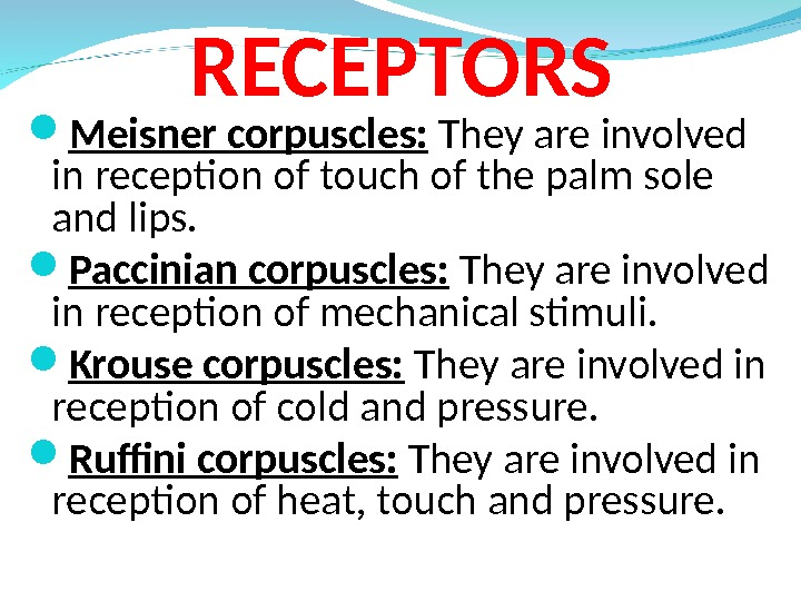 RECEPTORS Meisner corpuscles:  They are involved in reception of touch of the palm sole and