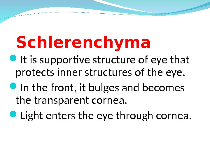 Schlerenchyma It is supportive structure of eye that protects inner structures of the eye.  In