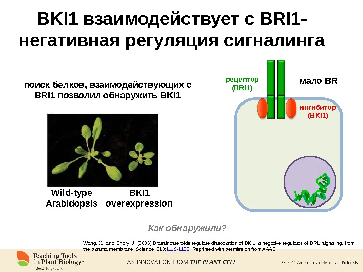Wang, X. , and Chory, J. ( 2006 ) Brassinosteroids regulate dissociation of BKI 1, a