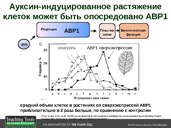 контроль ABP 1 сверхэкспрессия From Jones, A. M. , et al. ( 1998 )