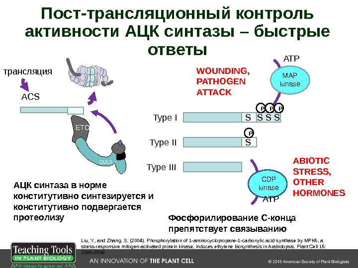 S S S P PP P MAP kinase ATP WOUNDING,  PATHOGEN ATTACK CDP kinase ATP