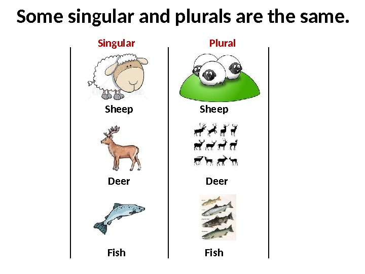 Some singular and plurals are the same. Sheep Deer Fish. Singular Plural