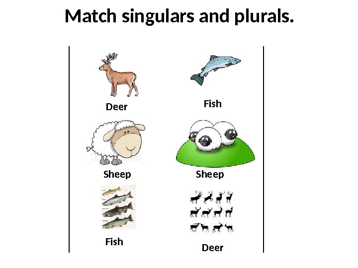 Match singulars and plurals. Sheep Deer Fish Sheep Deer. Fish