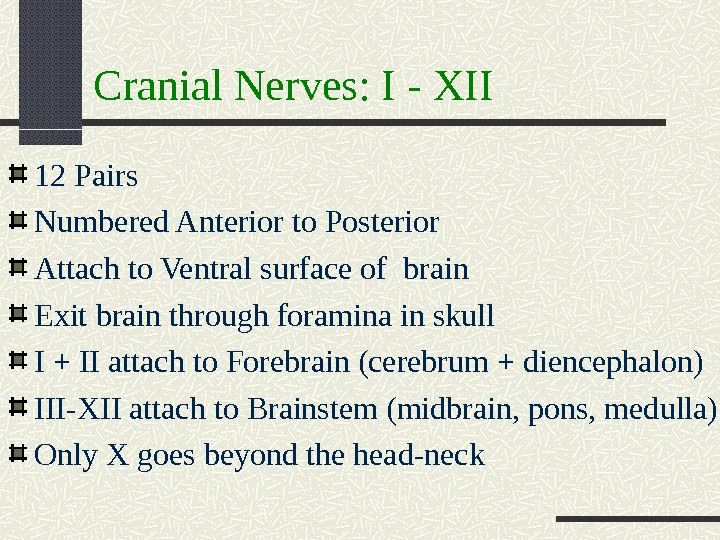 Cranial Nerves: I - XII 12 Pairs Numbered Anterior to Posterior Attach to Ventral surface of