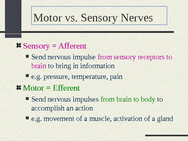 Motor vs. Sensory Nerves Sensory = Afferent Send nervous impulse from sensory receptors to brain to