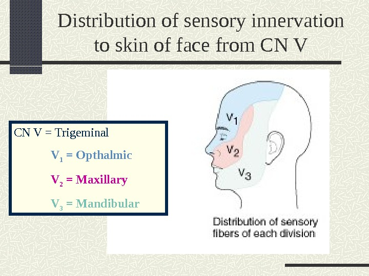 Distribution of sensory innervation to skin of face from CN V = Trigeminal V 1 =